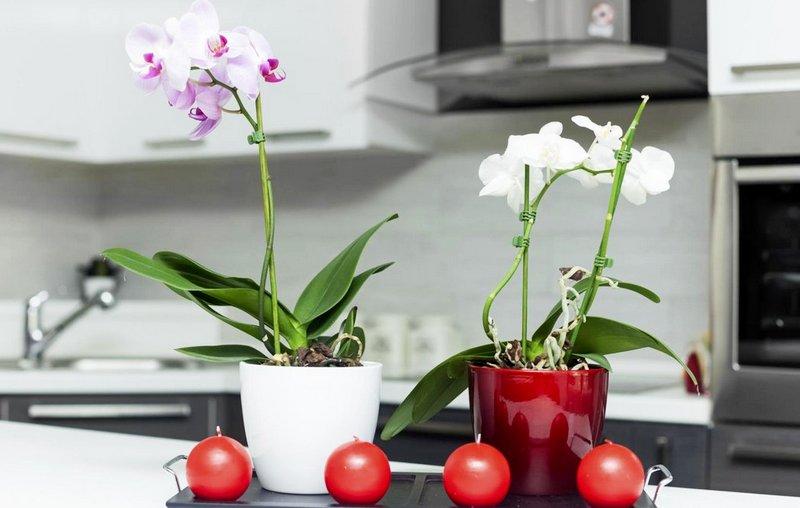 красивая орхидея на кухне