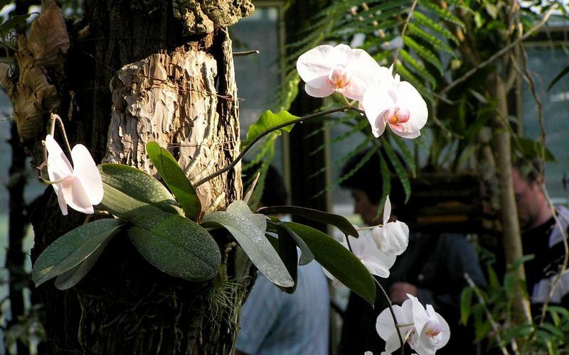 орхидея на дереве