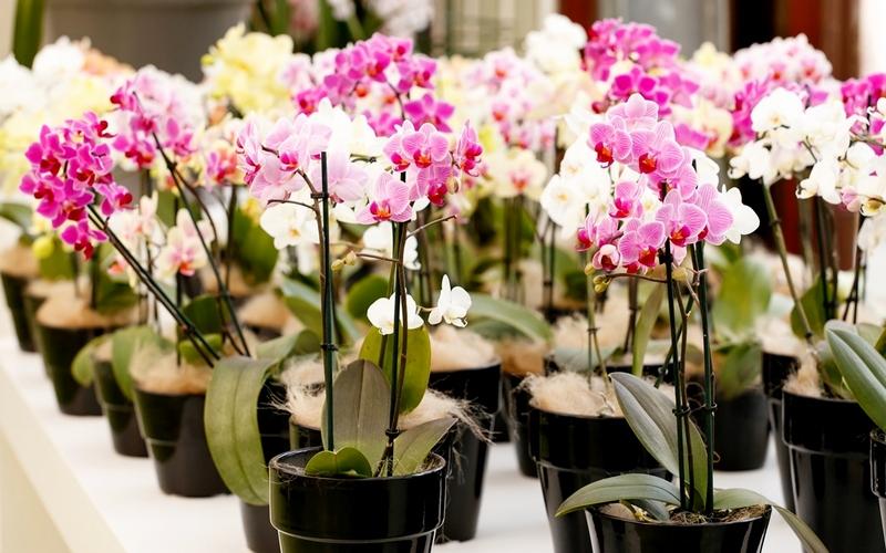 уход за красивыми орхидеями