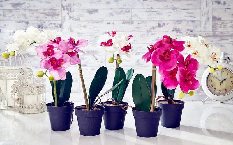 простой уход за орхидеей