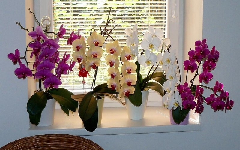 забота об орхидеях