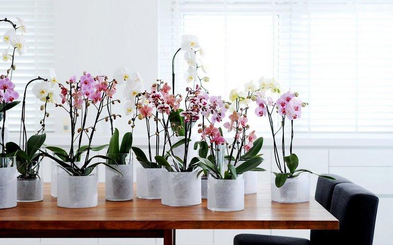 как ухаживать за комнатной орхидеей