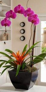 орхидея в горшке на кухне