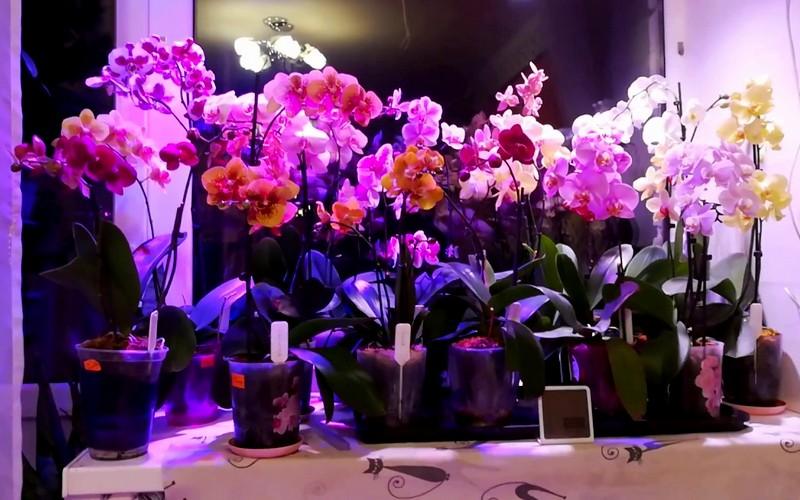 красивое освещение для орхидей