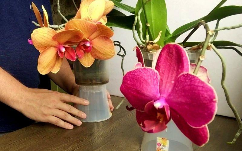 уход за орхидеей после покупки
