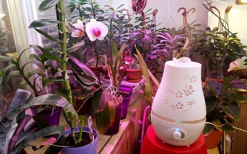 увлажнитель для орхидей