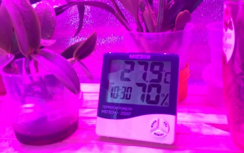 уровень влажности для орхидей