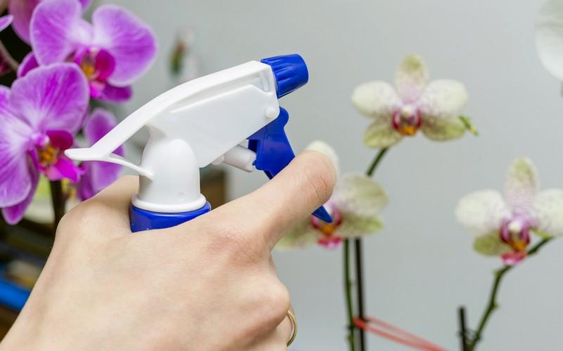 опрыскивание орхидей