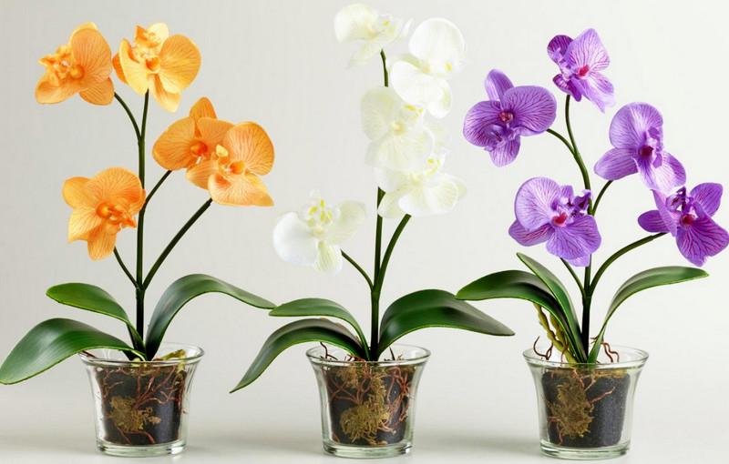 выбор горшка для орхидей