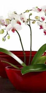 горшок из пластика для орхидей