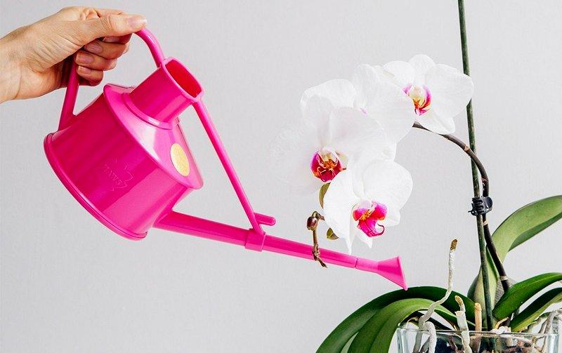 регулярность полива орхидей