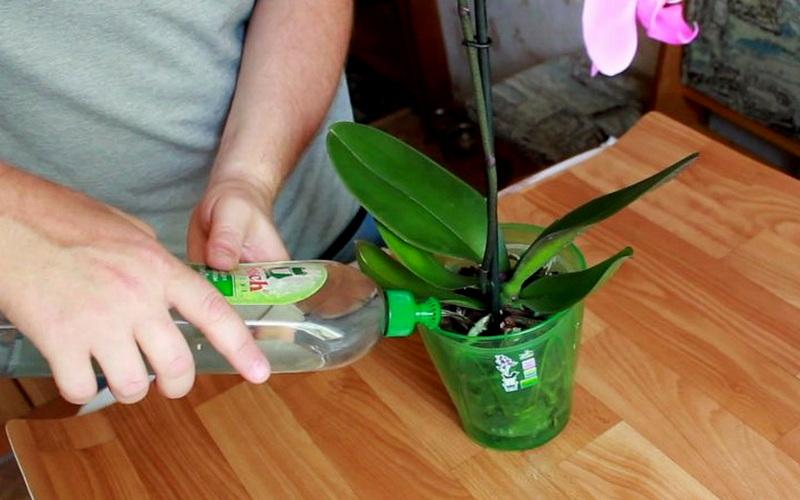 аккуратный пролив орхидей