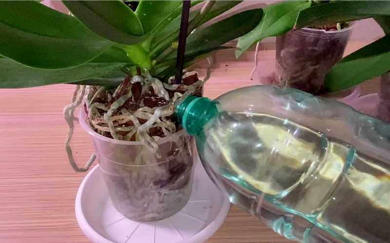 пролив орхидей