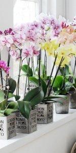 уход за орхидеей на кухне