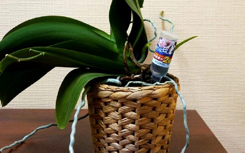 удобрение домашних орхидей