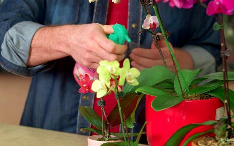 удобрение комнатных орхидей