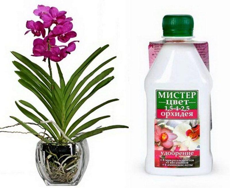 мистер цвет для орхидей