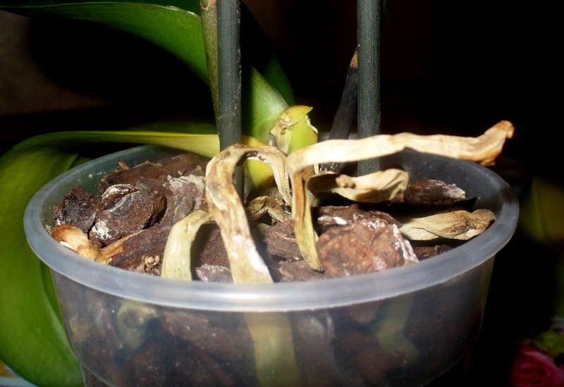 опадают цветки и листья у орхидеи