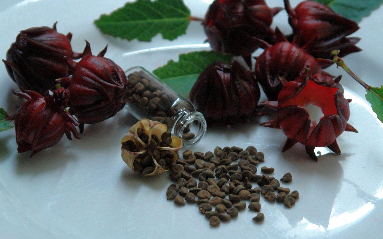семена гибискуса и цветки